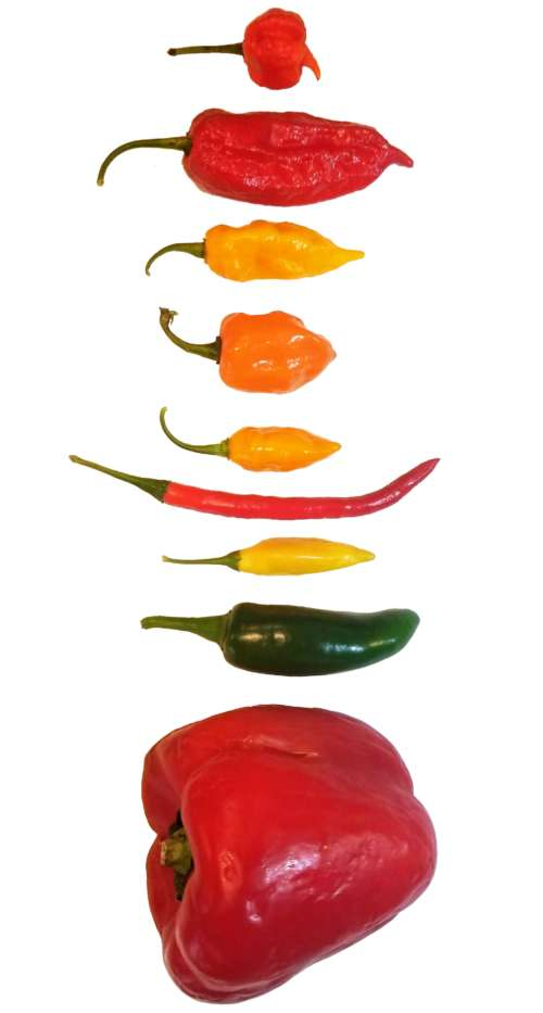 Capsaicinoids, Capsaicin and Scoville Units - ChilePeppers com
